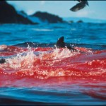 blood_in_the_water
